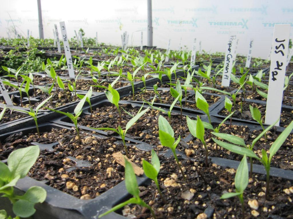 Soil & Seeding Workshop