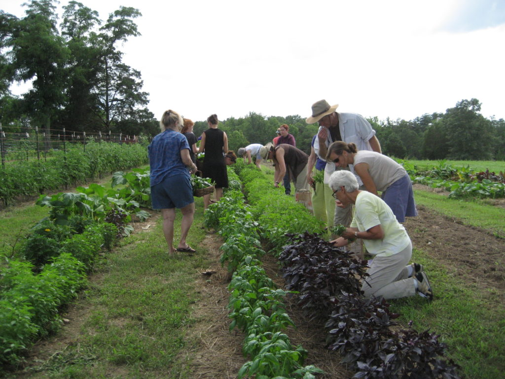WHOLE LIVING:                           A COMPREHENSIVE COURSE ON HERBALISM & GARDENING